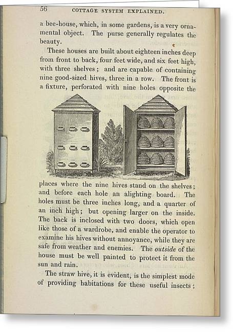 Storing Beehives Greeting Card by British Library