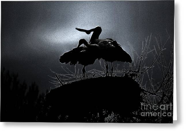 Stork Couple Greeting Card