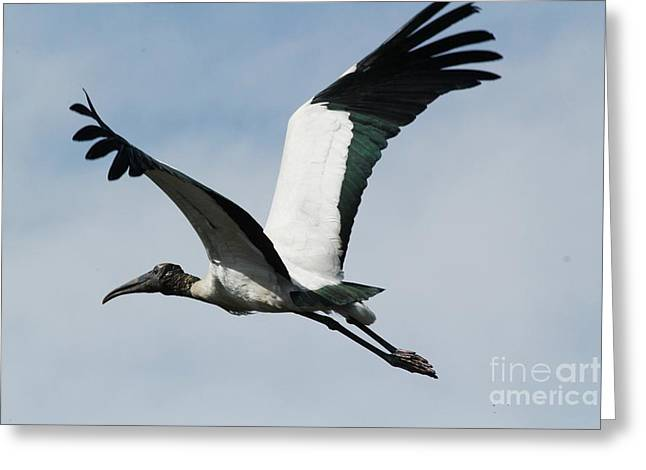 Stork In Flight Greeting Card by Theresa Willingham