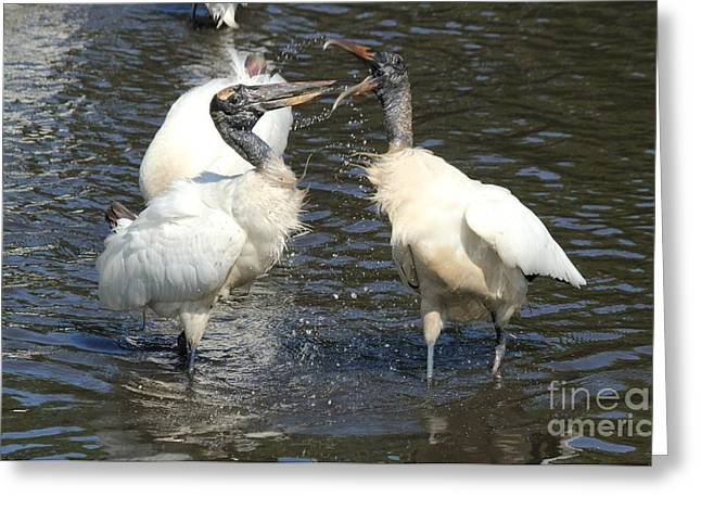 Stork Squabble Greeting Card by Theresa Willingham