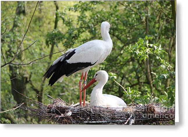 Storks Nesting Greeting Card by Jackie Mestrom