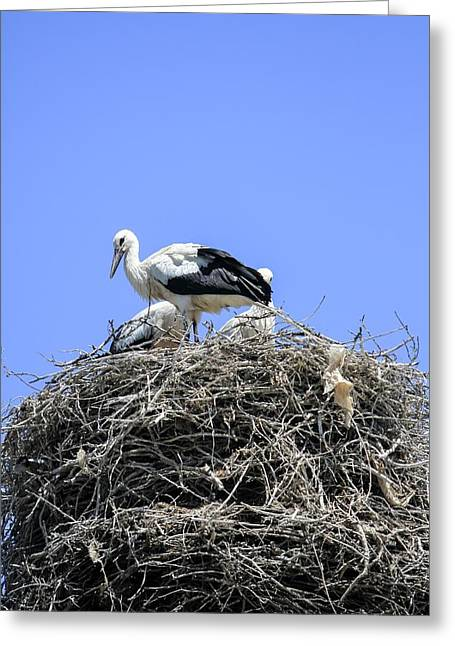 Storks Nesting Greeting Card by Photostock-israel