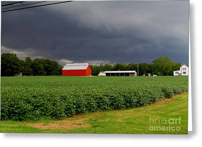 Storm Brewing Greeting Card by Trish Clark