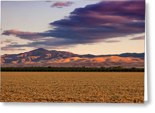 Storm Clouds And Wheat Fields San Joaquin County Ca Greeting Card by Troy Montemayor