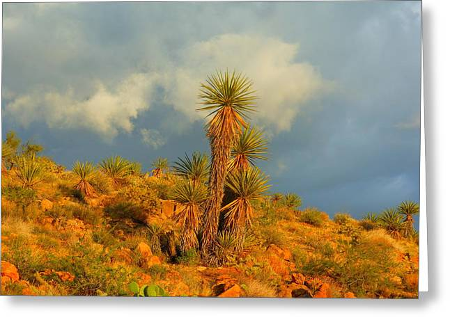 Storm In The Desert Greeting Card