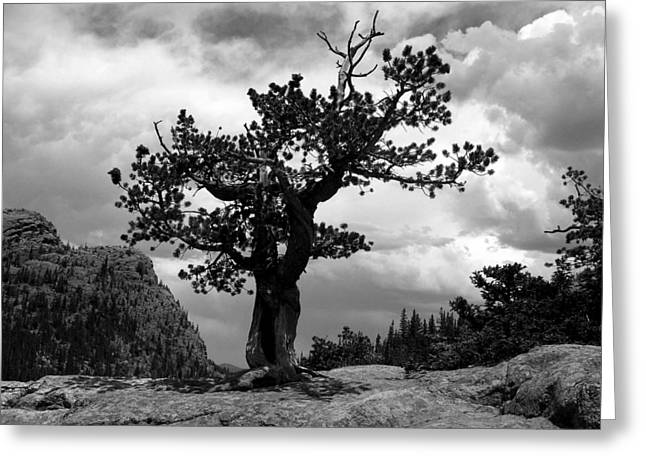 Storm Tree Greeting Card