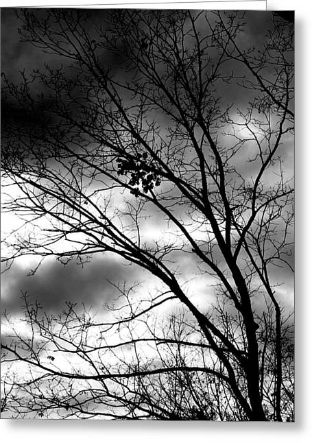 Greeting Card featuring the photograph Stormy Beauty by Candice Trimble