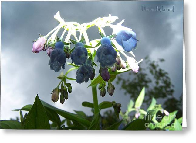 Stormy Bluebells Greeting Card