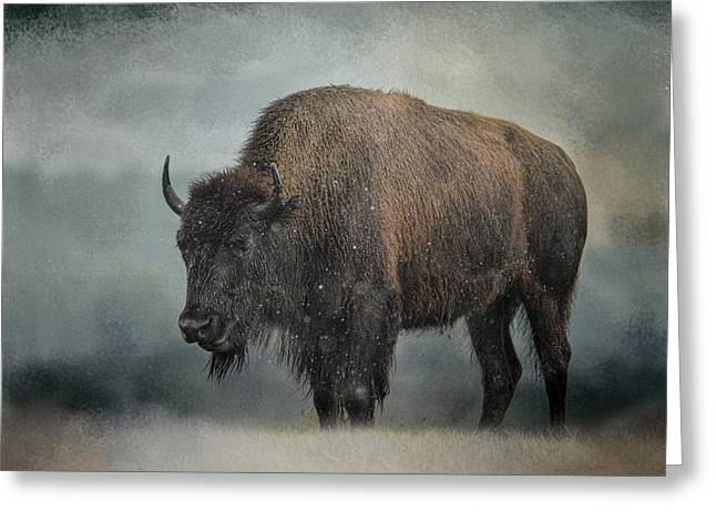 Stormy Day - Buffalo - Wildlife Greeting Card by Jai Johnson