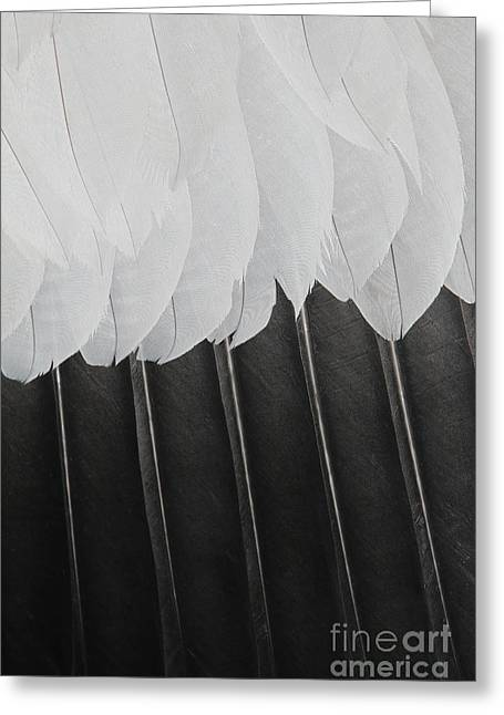 Greeting Card featuring the photograph Stormy Feathers by Judy Whitton