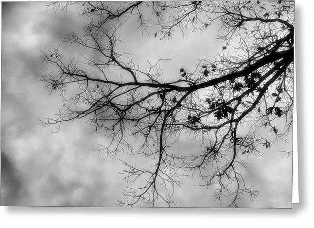 Stormy Morning In Black And White Greeting Card by Denise Beverly