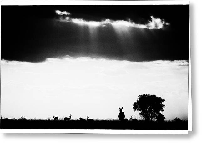 Greeting Card featuring the photograph Stormy Silhoettes by Mike Gaudaur
