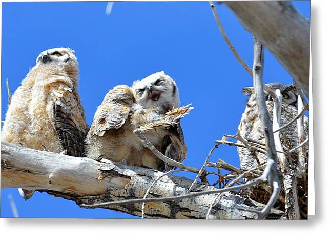 Story Time For The Owlets Part 5 Greeting Card
