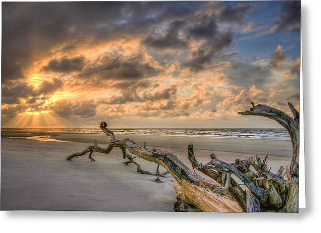 Stranded Greeting Card by Steve DuPree