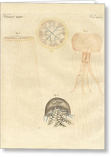 Strange Medusas Greeting Card