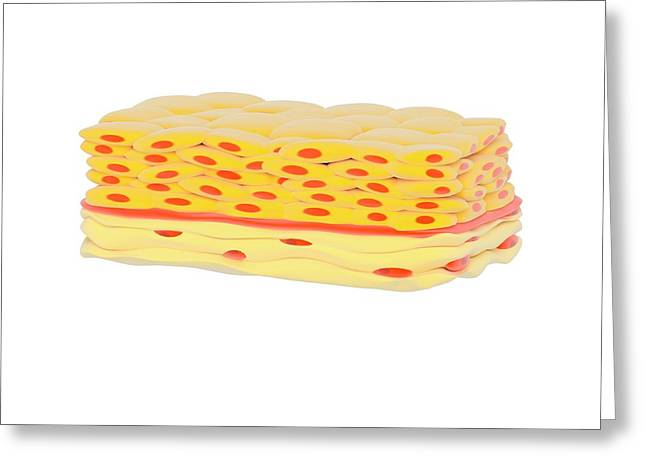 Stratified Squamous Epithelial Tissue Greeting Card