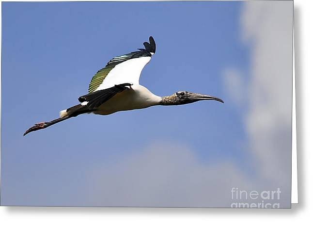 Stratostork Greeting Card by Al Powell Photography USA