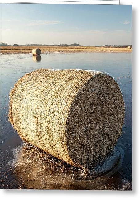 Straw Bales On A Flooded Field Greeting Card by Ashley Cooper