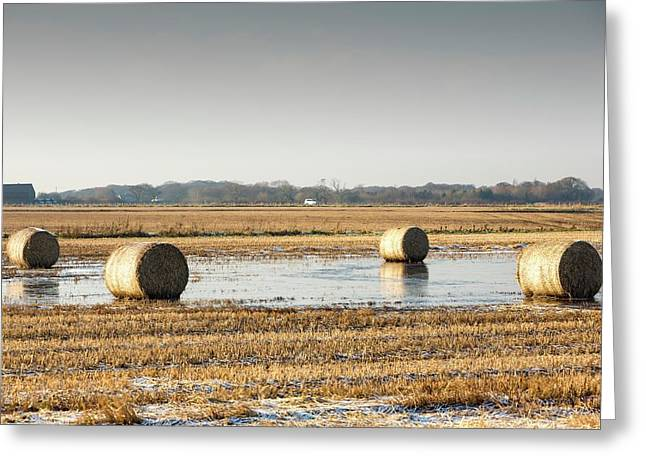 Straw Bales On Flooded Field Greeting Card by Ashley Cooper
