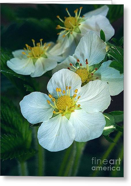 Strawberry Flowers Greeting Card by AmaS Art