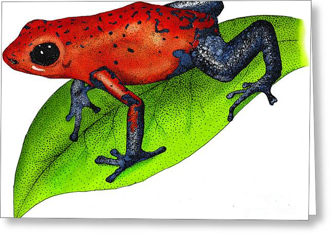 Strawberry Poison-dart Frog Greeting Card by Roger Hall