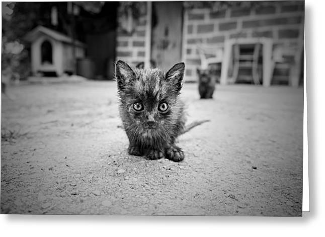 Greeting Card featuring the photograph Stray Cat #1 by Antonio Jorge Nunes