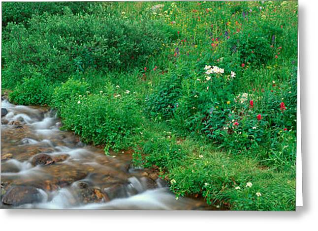 Stream And Alpine Flowers, Ouray Greeting Card by Panoramic Images