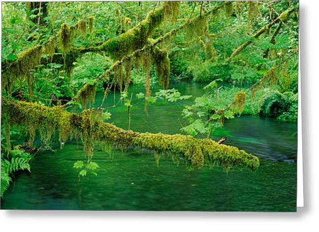 Stream Flowing Through A Rainforest Greeting Card by Panoramic Images