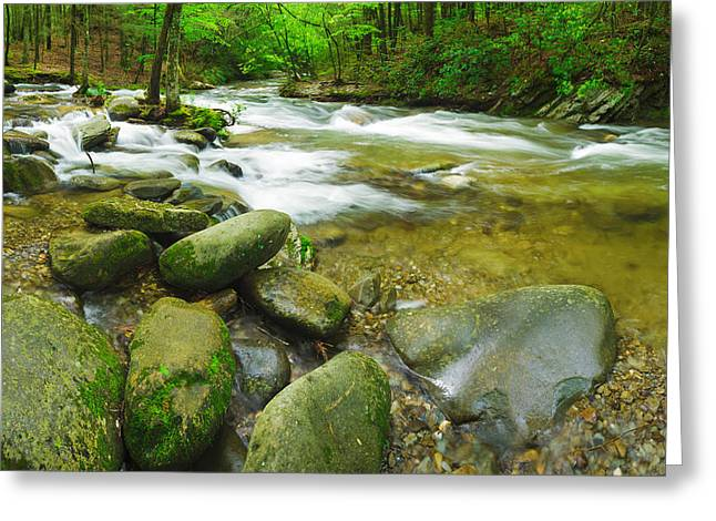 Stream Following Through A Forest Greeting Card by Panoramic Images