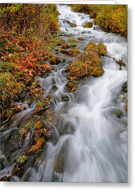 Stream In Autumn Greeting Card by Utah Images