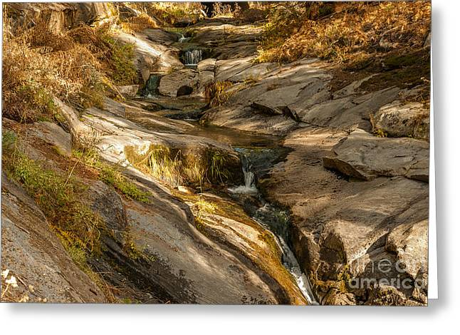 Stream In The Sierras  1-7828 Greeting Card