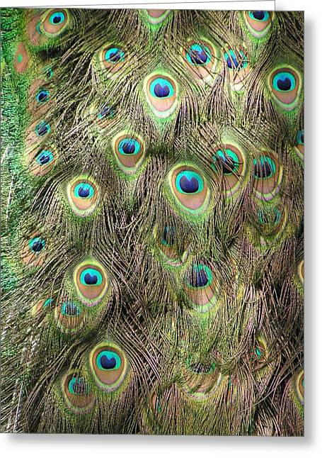 Greeting Card featuring the photograph Stream Of Eyes by Diane Alexander