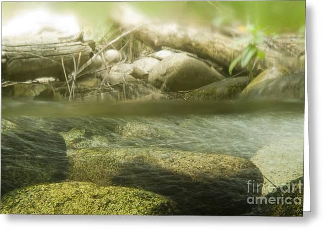 Stream Riffle Habitat Greeting Card by William H. Mullins