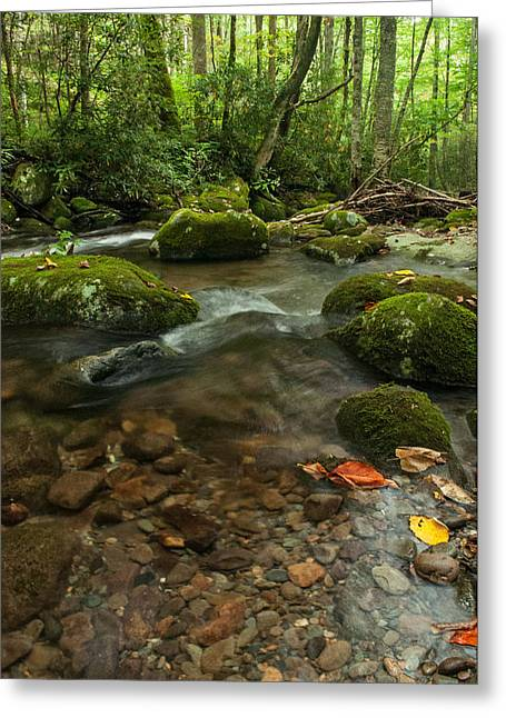 Greeting Card featuring the photograph Stream With The Color Of Early Fall. by Debbie Green