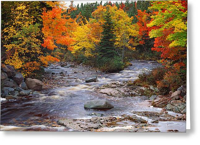 Stream With Trees In A Forest Greeting Card by Panoramic Images