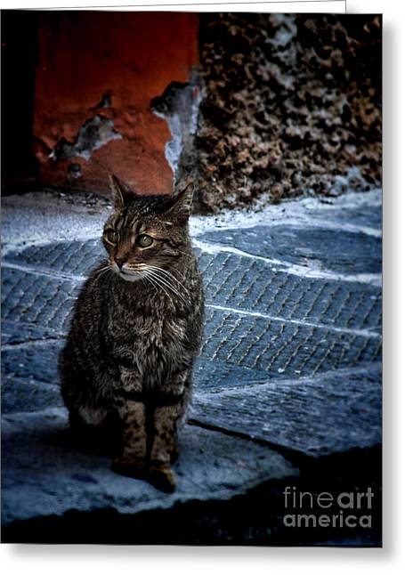 Street Cat Greeting Card by Karen Lewis