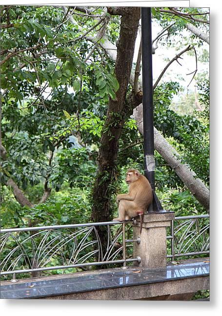 Street Monkey - Phuket Thailand - 01132 Greeting Card by DC Photographer