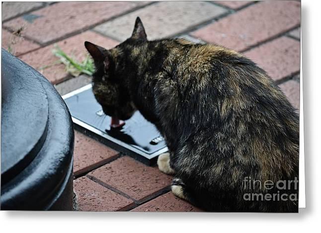 Street Smart Greeting Card by JW Hanley