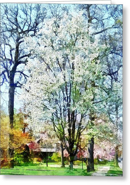 Street With White Flowering Trees Greeting Card by Susan Savad