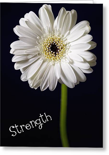 Strength Greeting Card by Kim Andelkovic