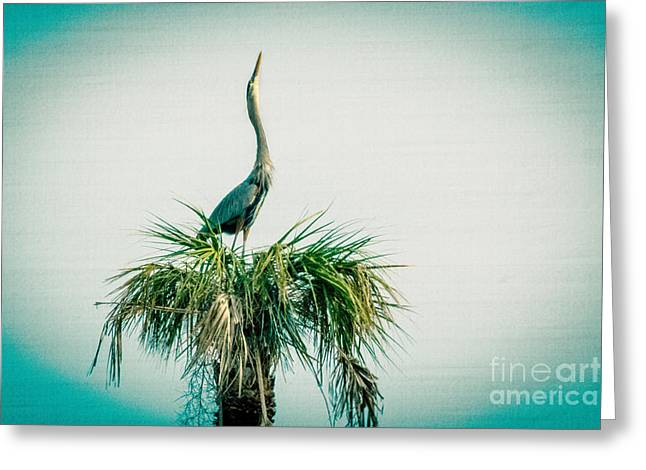 Stretching Heron Greeting Card by Bob and Nancy Kendrick
