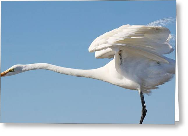 Stretching Out Greeting Card by Paulette Thomas