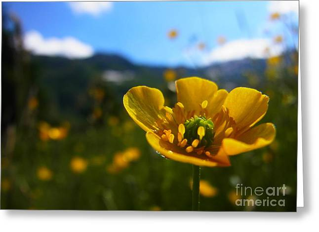Stretching Towards The Sun Greeting Card by Agnieszka Ledwon