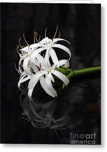 Greeting Card featuring the photograph String Lily #1 by Paul Rebmann