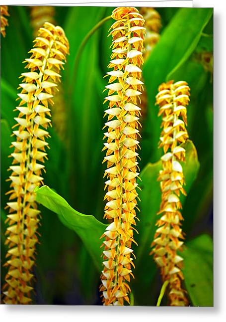 Greeting Card featuring the photograph Strings Of Dendrochilum Orchids by Aloha Art