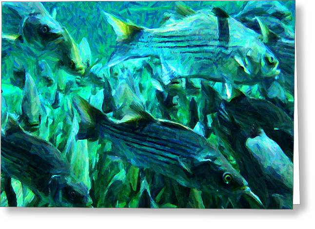 Striped Bass - Painterly V1 - Square Greeting Card by Wingsdomain Art and Photography