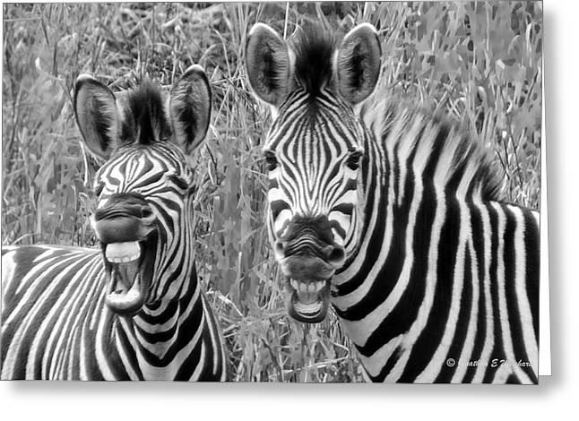 Striped Donkeys Zebra Chapman's Race Greeting Card by Jonathan Whichard