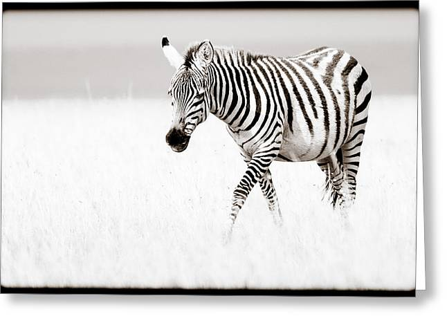 Greeting Card featuring the photograph Stripes On The Move by Mike Gaudaur