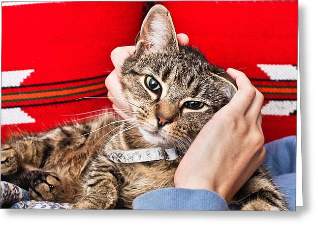 Stroking A Cat Greeting Card