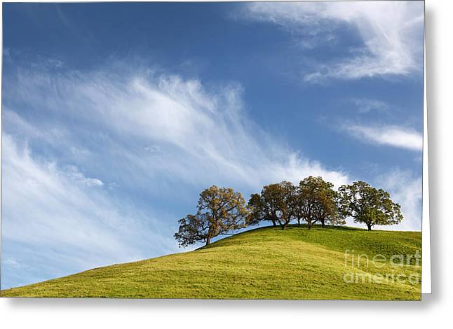 Stroll Up The Hill And Relax In The Shade 2014 Greeting Card